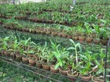 starting-orchids-016.jpg