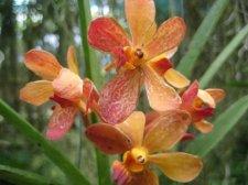 starting-orchids-018.jpg