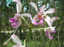 starting-orchids-020.jpg