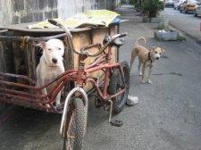 manila-dog-001