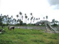 dinosaur-manila-008.jpg
