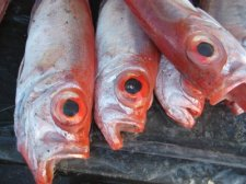 philippines-fish-004.jpg