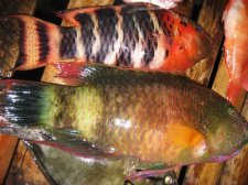 philippines-fish-008.jpg