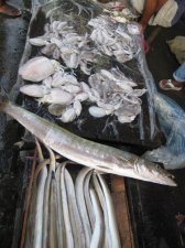 fish-market-017.jpg