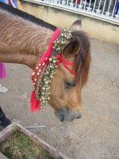 Horses of Sumbawa