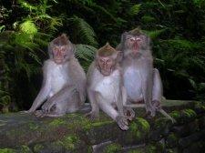 Ubud – Monkey Forest