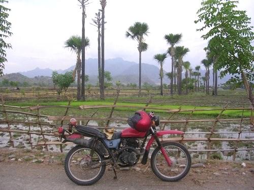 rice field in Oecussi
