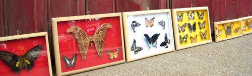 Palawan Butterfly Farm