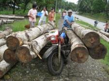 logging-mindanao-007-225x168