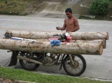 logging-mindanao-016