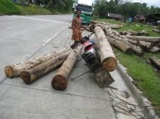 logging-mindanao-017