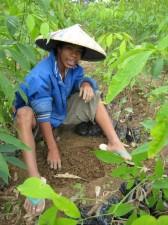 mindanao-rubber-tree-004
