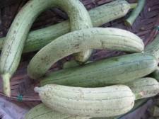 fruits-vegatables-019