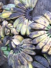 fruits-vegatables-038