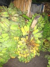 fruits-vegatables-039