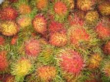 philippine-vegetables-011