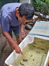 Ormoc tropical fish dealer