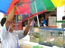 tropical-fish-philippines-009