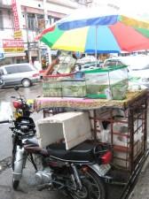 tropical-fish-philippines-014