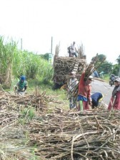 sugar-cane-workers-003