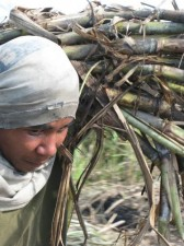 sugar-cane-workers-004