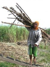 sugar-cane-workers-006