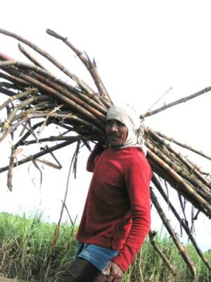 sugar-cane-workers-007
