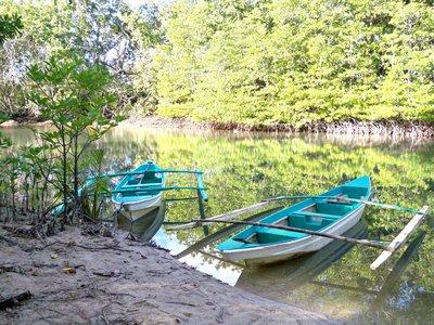 sabang-mangrove-002