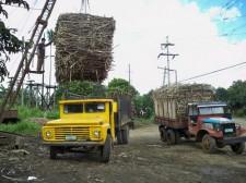 sugar-cane-leyte-017