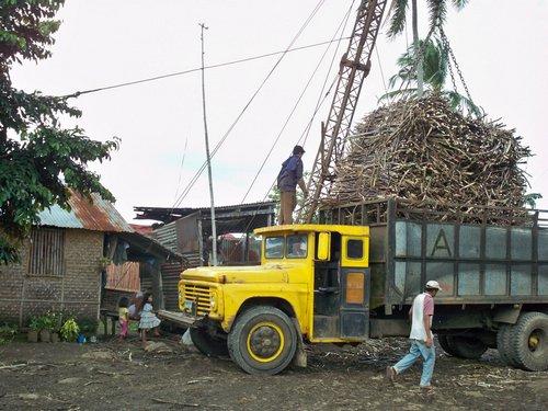 sugar-cane-leyte-019