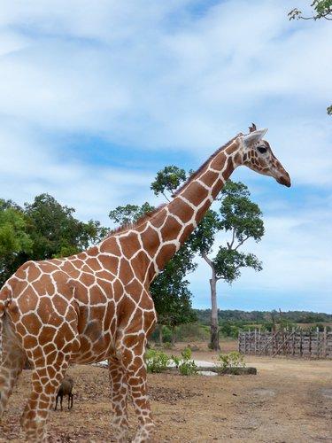 beautiful-zebras-016