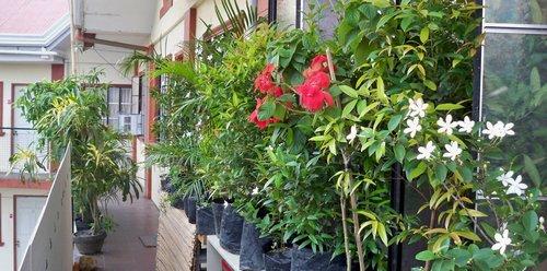 Balcony Plant Plants on Balcony The Palms