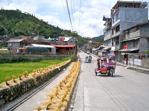 drying rice