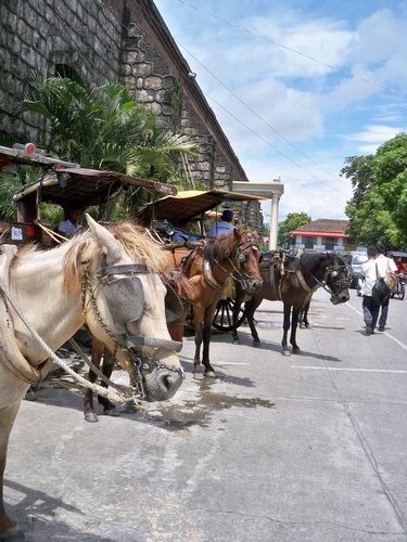 horses in the historic district