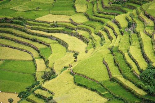 North Luzon Rice Terraces