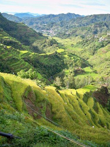 Rice Terraces of Banaue