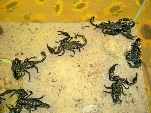 aquarium with scorpions