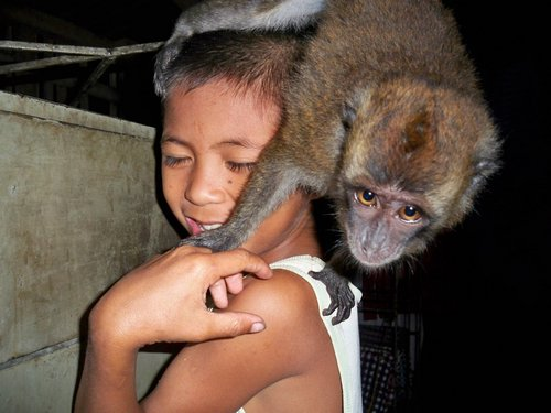 pet monkey with child