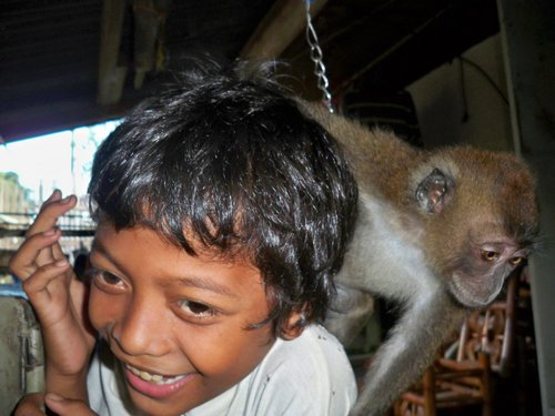 friendly pet monkey
