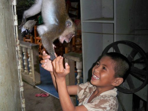 pet monkey getting aggressive