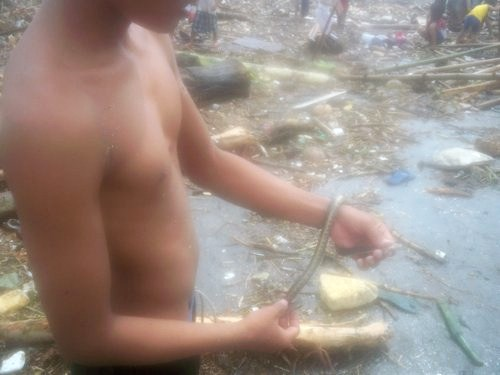 catching snakes in Sendong
