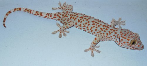 a new gecko moved in