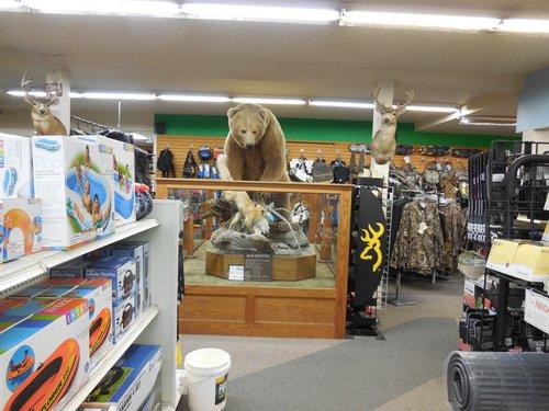 brown bear in sport shop